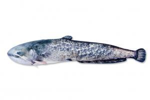 Polštář plyšová ryba Sumec